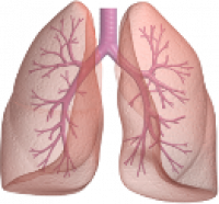 Lungs's Logo